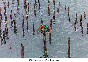 Osprey Nest on Pilings