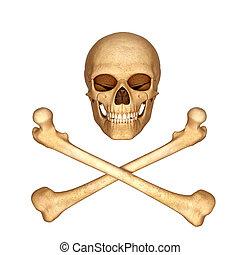 ossa, cranio, 3d