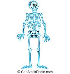 ossos, dia das bruxas, arte, esqueleto, cranio