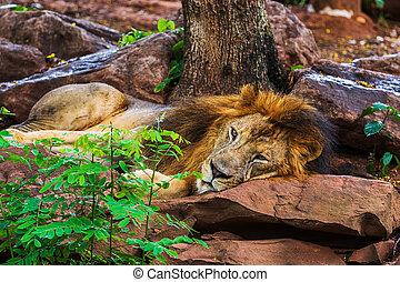 ostatní, lev, strom