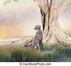 ostatní, strom, gepard, big