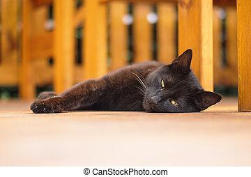 ostatní, temný devítiocasá kočka, ležící, terasa, dno