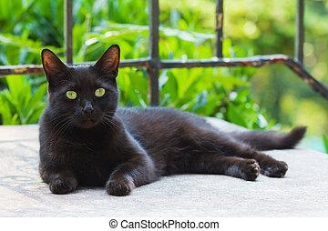 ostatní, temný devítiocasá kočka