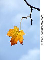 ostatni, liść, od, jesień