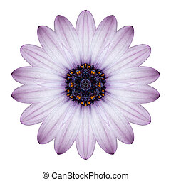 osteospermum, デイジー, 隔離された, 万華鏡のようである, 花, mandala