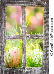 ostereier, auf, grünes gras