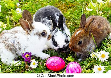 ostereier, verstecken, kaninchen