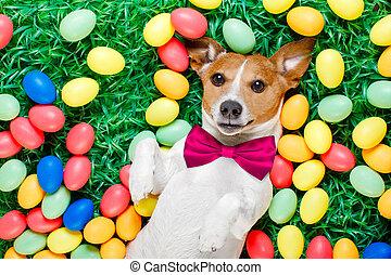 osterhase, hund, mit, eier