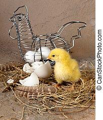 osterkorb, mit, eier, und, küken