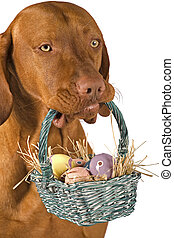 ostern, hund
