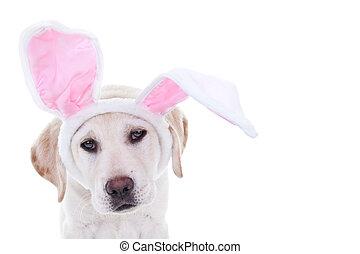 Ostern, kaninchen, hund