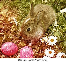Ostern, kaninchen