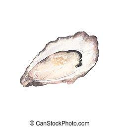 ostrica, aquarelle., acquarello, vettore, illustration., fondo, bianco