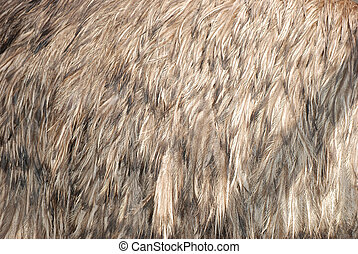 ostrich bird feather brown