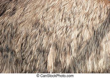 ostrich bird feather brown