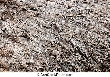 Ostrich bird feather brown texture background