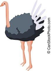 Ostrich bird icon, isometric style
