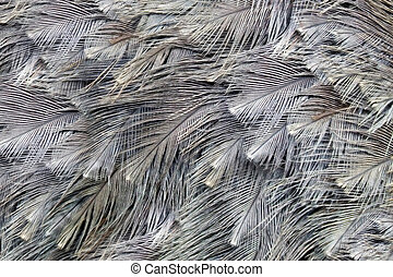 Ostrich feather background