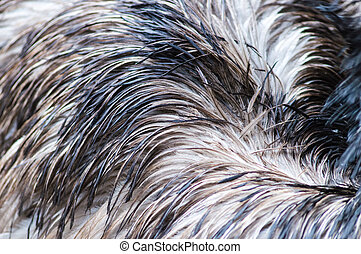 Ostrich feather background.