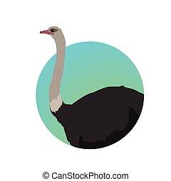 Ostrich Flat Design Vector Illustration