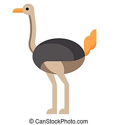 Ostrich flat illustration