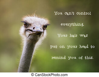 Comincal ostrich looking at the camera. Motivational quotation saying 'You cant control everything. Your hair was put on your head to remind you of this'.