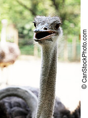 Animal - Ostrich head on natural green background. Animal ...