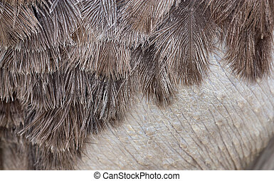 Ostrich leather with feathers in the background