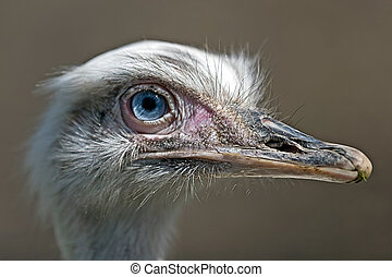Ostrich look 1