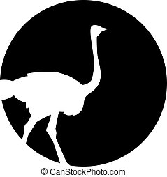 Ostrich silhouette in front of the moon