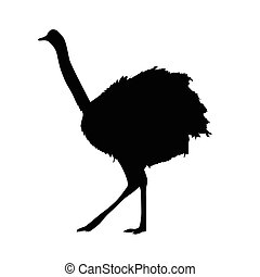 ostrich vector silhouette