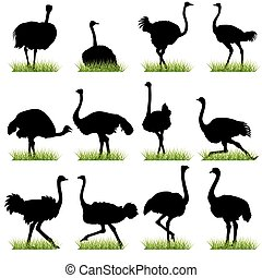 Ostriches Silhouettes Set