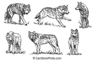 osvětlení, dát, vlky, -, vektor
