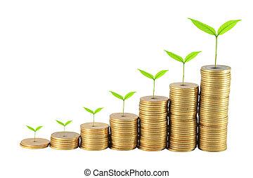 oszczędności, twój, wzrastać