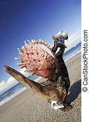osztriga, képben látható, a, tengerpart