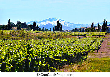 Otago - New Zealand - Landscape of vineyards in Gibbston...