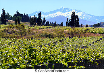 Otago - New Zealand - Landscape of vineyards in Gibbston...