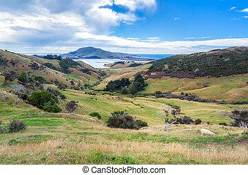 Otago peninsular
