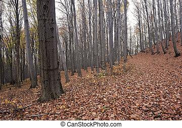 otoñal, bosque