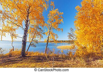 otoñal, park., árboles de otoño, y, hojas