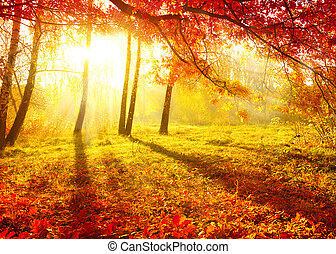 otoñal, park., árboles de otoño, y, leaves., otoño