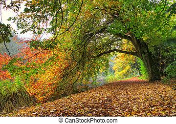 otoño, árbol, arco