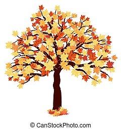 otoño, árbol del arce