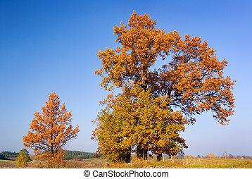 otoño, árboles.