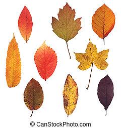 otoño, 02, hojas, colección