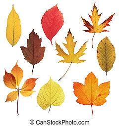 otoño,  03, hojas, Colección