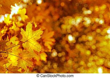 otoño, amarillos, hojas