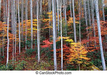 otoño, arbustos