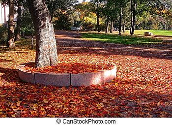 otoño, arce, árboles, en, otoño, parque de la ciudad