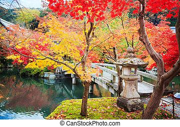 otoño, arce japonés, jardín